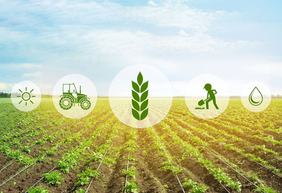 Icons and field on background. Concept of smart agriculture and modern technology (Africa Studio/AdobeStock)